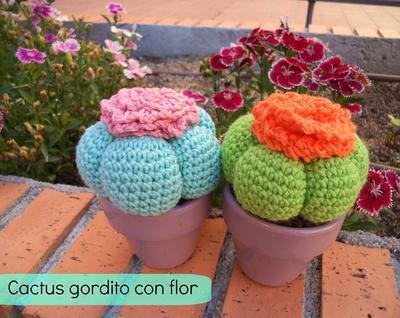 Cactus gordito con flor