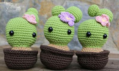 Coquetos Cactus
